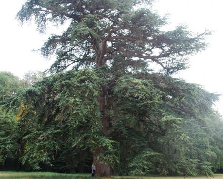 Les arbres du. château de la Cigogne