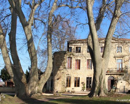 Le platane du château des Bruyères