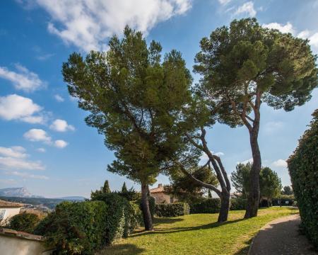 Les pins d'Alep d'Aix-en-Provence