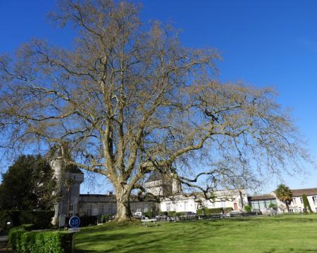 Le platane et le chêne du château de Mornay