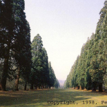 allee_de_sequoias_du_parc_de_Villeroy_a_Mennecy_Essonne